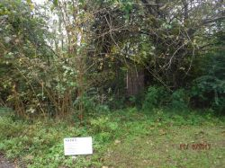 348 CAMMEL ST. Nuisance Property