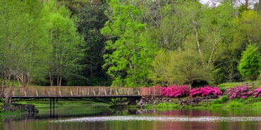 bridge over lake in a park